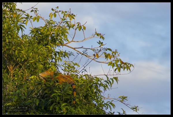 Orange Walk 5825